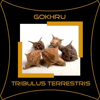 Gokhru / Gokharu