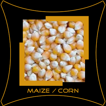 Yellow Corn / Makka