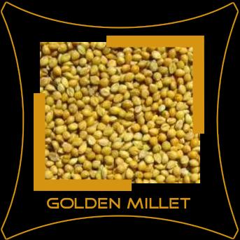 Navni / Golden Millet