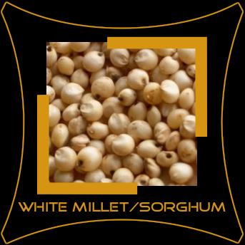 Sorghum / Jowar / White Millet