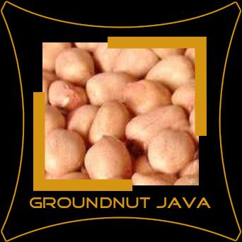 Peanut Java
